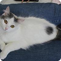 Adopt A Pet :: Emmaline - Hamilton, ON