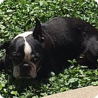 Adopt A Pet :: Buzz - Jackson, TN