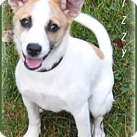 Adopt A Pet :: Lizzy - Marlborough, MA
