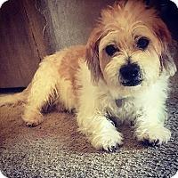 Adopt A Pet :: RANDY - Mission Viejo, CA