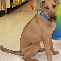Adopt A Pet :: Jerome - Gilbert, AZ
