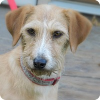 Adopt A Pet :: Rebel - mooresville, IN