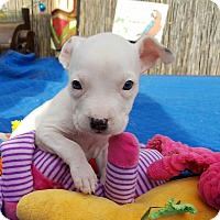 Adopt A Pet :: Milk - West Los Angeles, CA