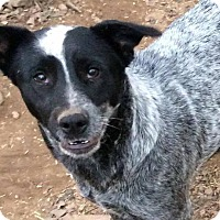Adopt A Pet :: Beth in CT - Manchester, CT