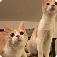 Adopt A Pet :: Starsky and Hutch - knoxville, TN