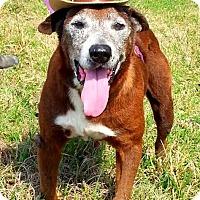 Adopt A Pet :: Madelyn - N - Huntington, NY