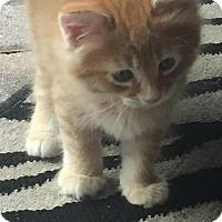 Adopt A Pet :: Tigger - Lake Worth, FL