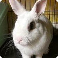Adopt A Pet :: Cranberry - Woburn, MA