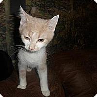 Adopt A Pet :: Romeow - Norwich, NY