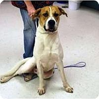 Adopt A Pet :: Rufus - Minneola, FL