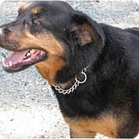 Adopt A Pet :: Sasha - Surrey, BC