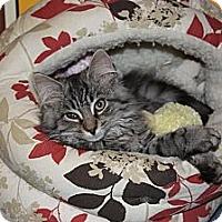 Adopt A Pet :: Grady (LE) - Little Falls, NJ