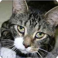 Adopt A Pet :: Reeses - Lake Ronkonkoma, NY