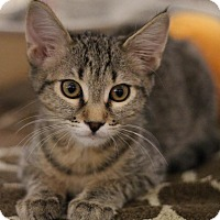 Adopt A Pet :: Yogi - Sacramento, CA