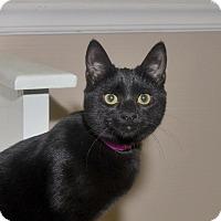 Adopt A Pet :: Whirlaway - Medina, OH