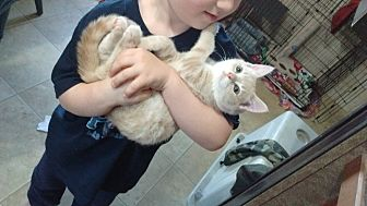 Domestic Shorthair Kitten for adoption in Somerville, Texas - Deuce