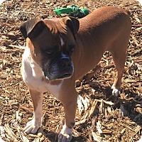 Adopt A Pet :: Frank - Westminster, MD