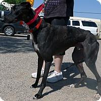 Adopt A Pet :: Fusion - Tucson, AZ