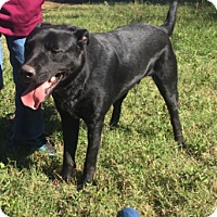 Border Collie/Shepherd (Unknown Type) Mix Dog for adoption in Cat Spring, Texas - Google