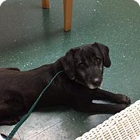 Adopt A Pet :: Nick - Boston, MA