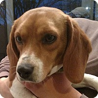 Adopt A Pet :: Sipsey - Sweetwater, TN