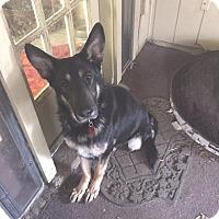 Adopt A Pet :: Bismarck - Portland, ME