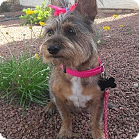 Adopt A Pet :: Dutches - Las Vegas, NV