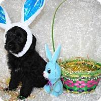 Adopt A Pet :: Tipsy - Sioux Falls, SD