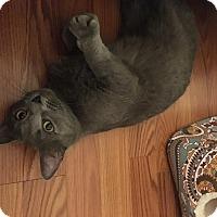 Adopt A Pet :: Twila - Avon Park, FL