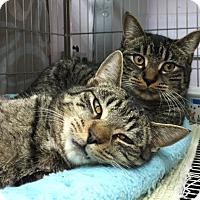Adopt A Pet :: Boe and Scout - Elmwood Park, NJ