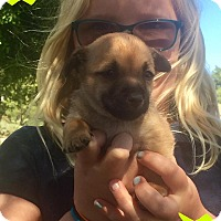 Adopt A Pet :: Larry, Eddie & Walter - Phoenix, AZ