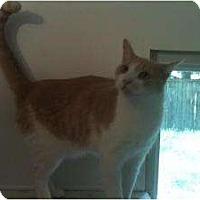 Adopt A Pet :: JB - Ringwood, IL