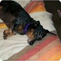 Adopt A Pet :: Jasmine - Vale, OR