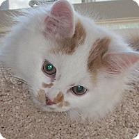 Adopt A Pet :: Aster - N. Billerica, MA