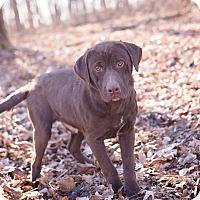 Adopt A Pet :: Cubbi (Bonded Pair) - Lewisville, IN