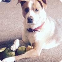 Adopt A Pet :: *URGENT* Ozzy - Van Nuys, CA