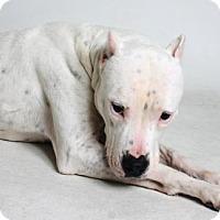 Adopt A Pet :: Blanca - Redding, CA