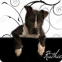 Adopt A Pet :: Ruthie - Des Moines, IA