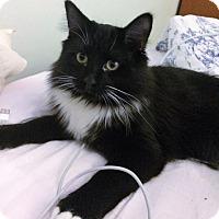 Adopt A Pet :: Rajab - Vancouver, BC