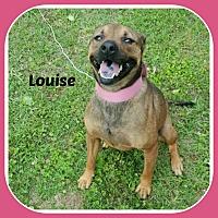 Adopt A Pet :: LOUISE - Malvern, AR