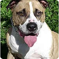 Adopt A Pet :: Addante - Hoffman Estates, IL