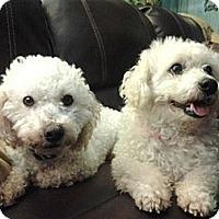 Adopt A Pet :: Smiley - Seattle, WA