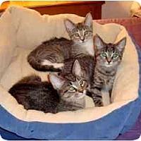 Adopt A Pet :: Lola - Milwaukee, WI