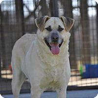 Adopt A Pet :: Riley - Pocahontas, AR