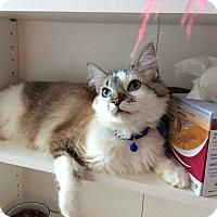 Adopt A Pet :: Raquel Welch - San Ramon, CA