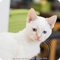 Adopt A Pet :: Flame - Fountain Hills, AZ