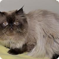 Adopt A Pet :: Ray - Medina, OH