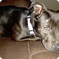 Adopt A Pet :: JoJo - Tampa, FL