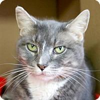 Adopt A Pet :: Stevie - Jefferson, WI