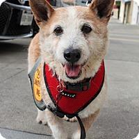 Adopt A Pet :: Butch - Lomita, CA